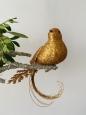 Vtáčik na štipci zlatý