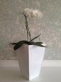 Kvetináč pozinkovaný plech biely