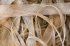spracovaná kôra morušovníka